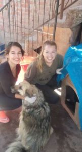Hundeheim Cusco